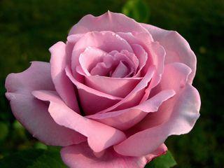 Цветочный магазин 0904070